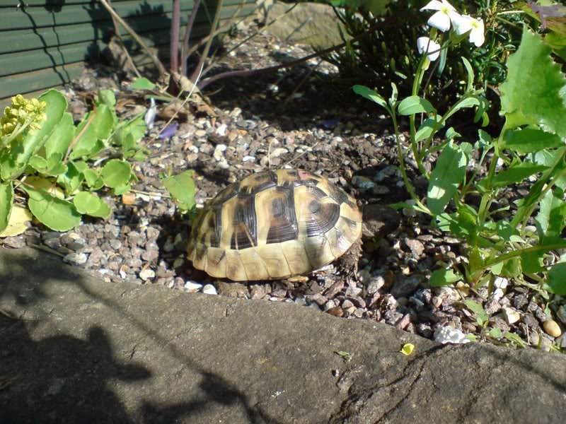Tortsmad Uk Outdoor Tortoise Enclosures Or Houses
