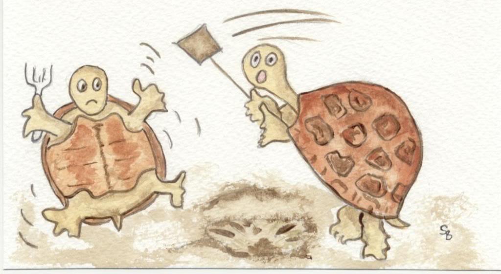 Tortsmad UK ~ Russian Tortoises/Horsfield Tortoises